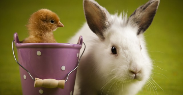 Unser Oster-Angebot für Sie: 1 Nacht geschenkt!